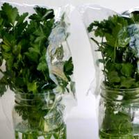 Tasty Tip Tuesday: Storing Herbs